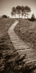 RealitySoSubtle 6x12 review - Andre Kohler State Park Boardwalk and trees 2
