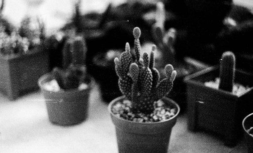 5 Frames With... ILFORD HP5 PLUS, EI 400), Zenit E and Helios 44-2 58mm f/2) - by Xochitl Elvira
