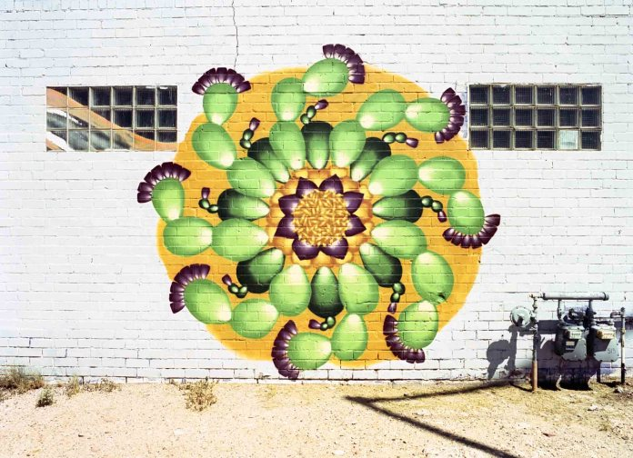 Cactus Mandala mural by Zina Rubiner - Mamiya-Sekor C 45mm 2.8 N, Kodak Portra 400
