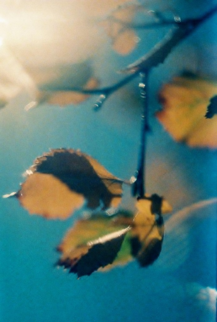 5 Frames With... Kodak EKTACHROME 160T (EI 100-150 / 35mm / Zenit TTL) - by Lucy Wainwright