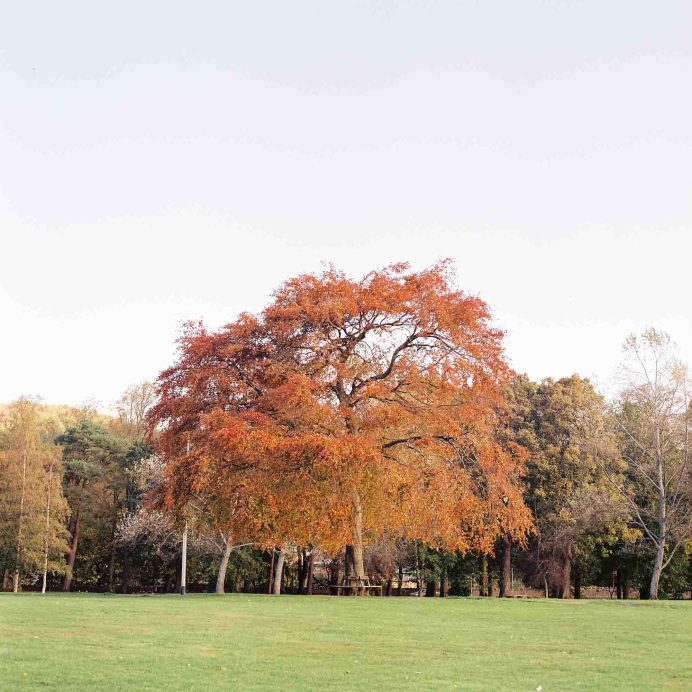 Tree - Victoria Park Peebles - Hasselblad 500CM, Lomography Color Negative 400