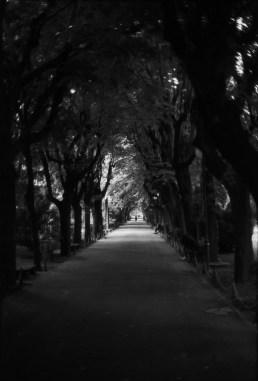 Marius-Andrei Voicu - Tree tunnel