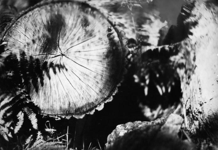 Richmond Park, William Butcher and Son's Half Plate camera, C.E Clifford Petzval Lens, ILFORD Direct Positive paper