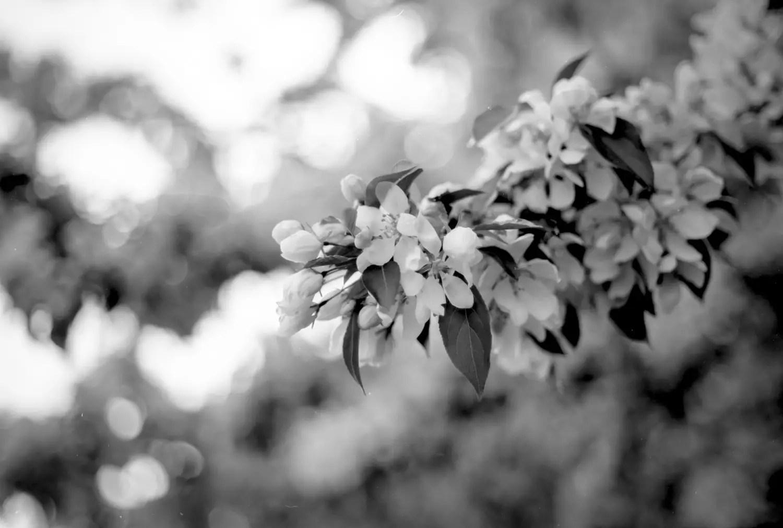 5 Frames With... KODAK Panchromatic Separation Film 2238 (35mm / EI 12 / Nikon F2 Photomic) - by August Kelm