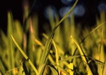 Photography: Autumn glow – Shot onFuji Provia 100F (RDP III)at EI 100 (4×5 format)