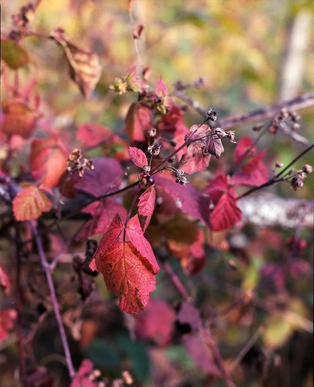 In my garden (Savoie)