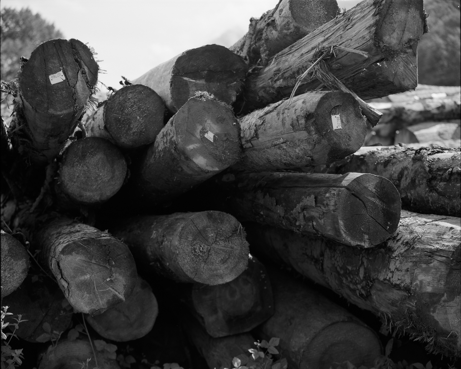 Wood stock from Rotherens sawmill (Savoie)