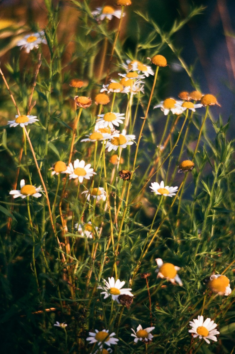 5 Frames With... Fujicolor C200 (35mm : EI 800 : Canon AE-1) - by Piper McManamon
