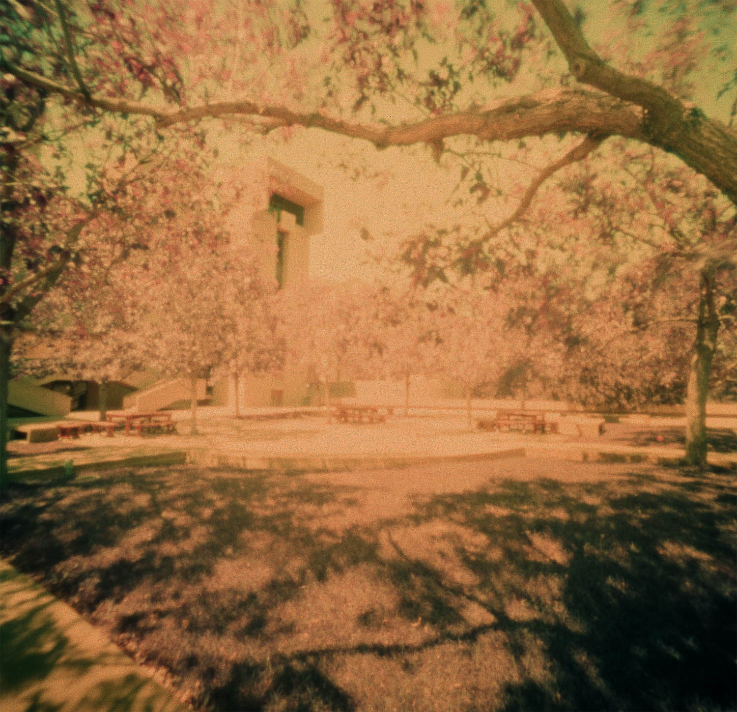 Figure 8 - LomoChrome Purple XR 100-400 - Pinhole (60 seconds)