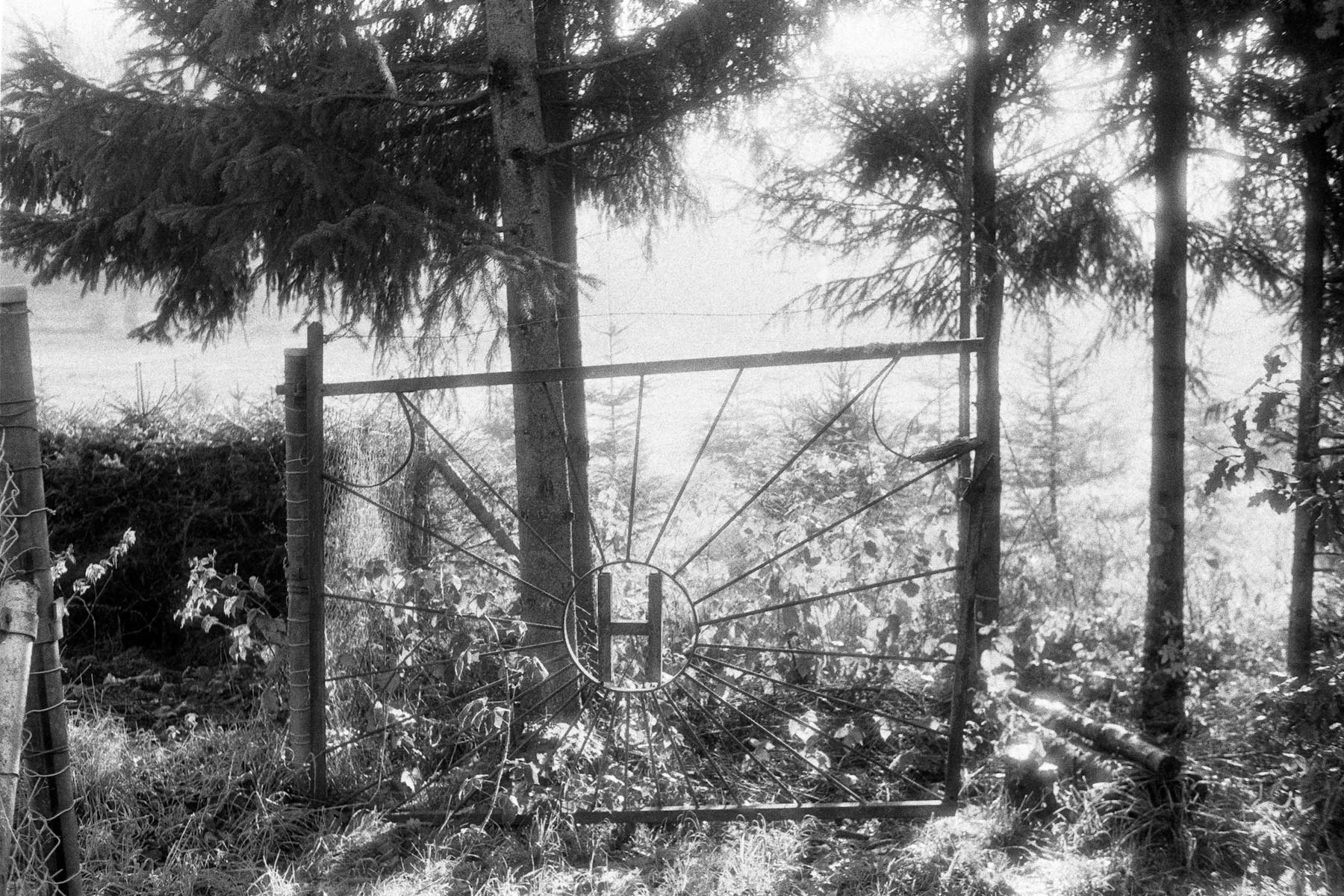 5 Frames With... Film Washi F (EI 100 / 35mm format / Rollei 35TE) - by Olaf Lengler