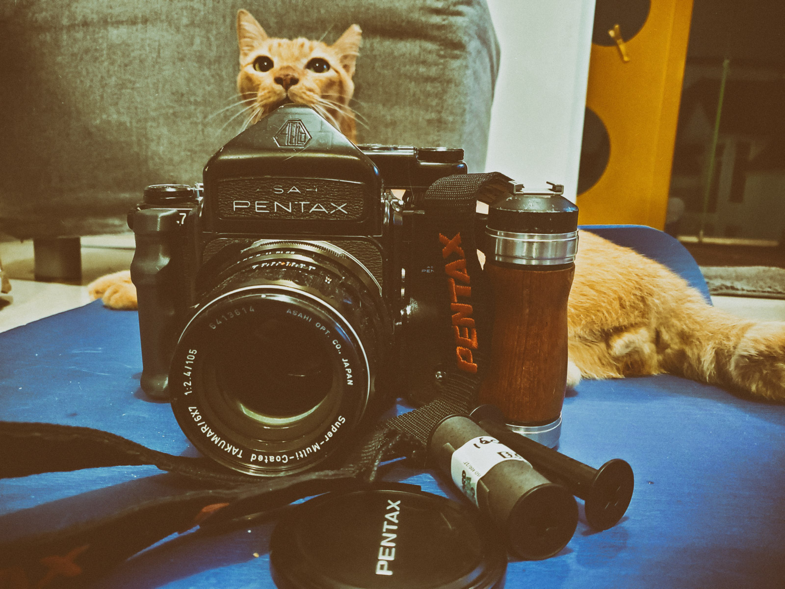 Harry the cat and Luther-the Pentax 6x7