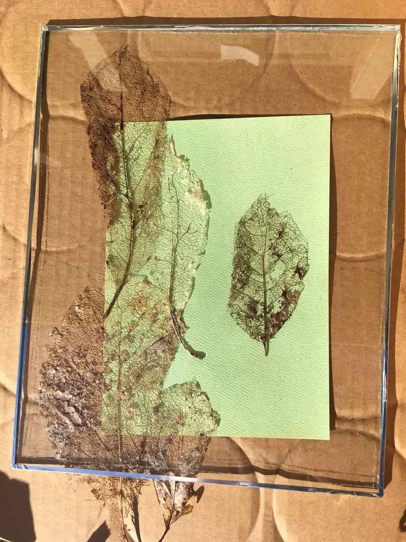 Monika - Leaf skeleton cyanotype framing
