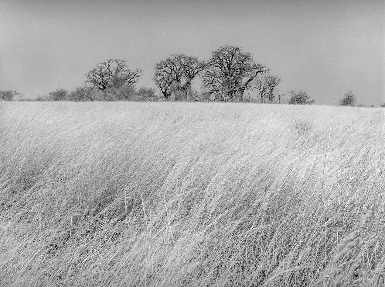 Baine's Baobabs, Kudiakam Pan, Kalahari, Botswana - Kodak Tri-X Pan in HC-110. Pentax 67II 45mm