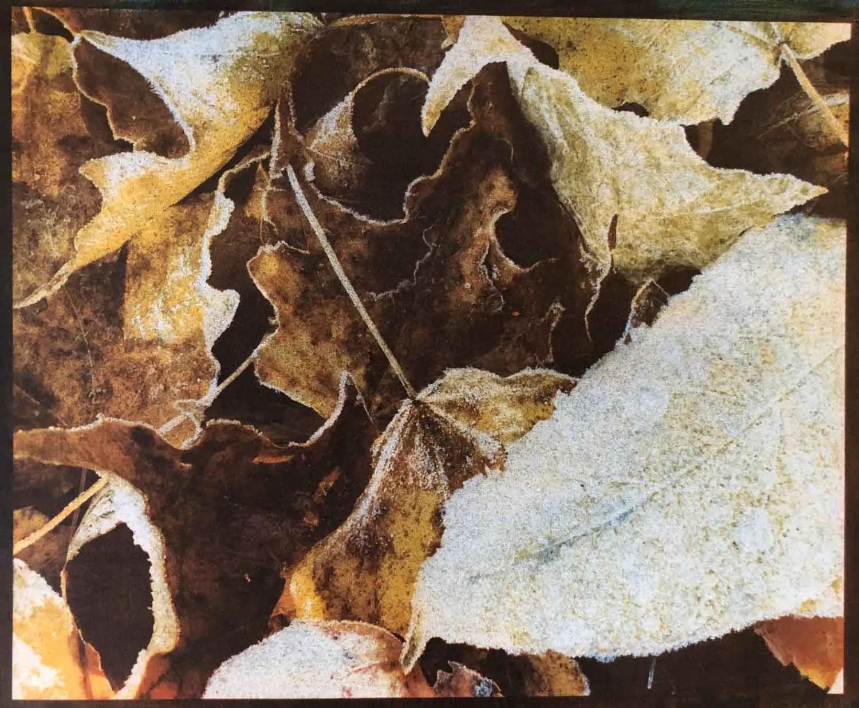 Frozen leaves - v3
