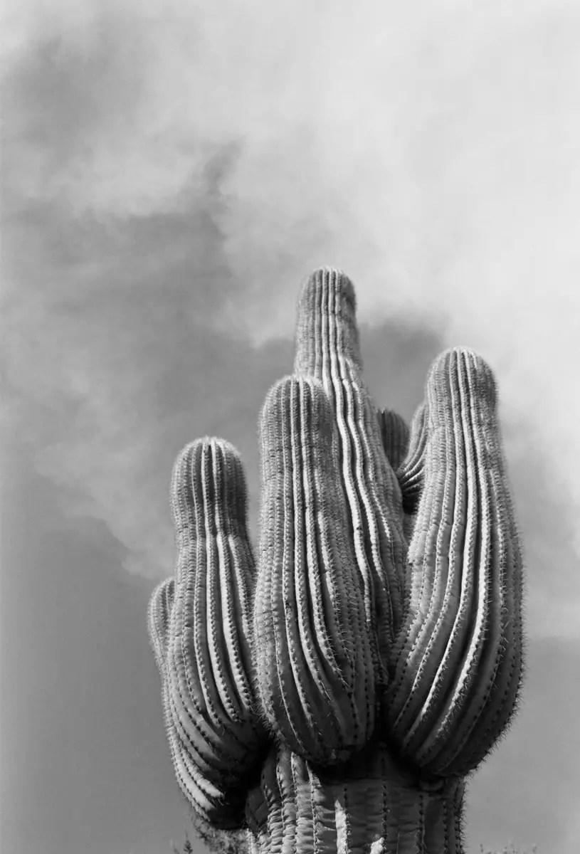 Fuji GW690III Professional - Arizona, Saguaro