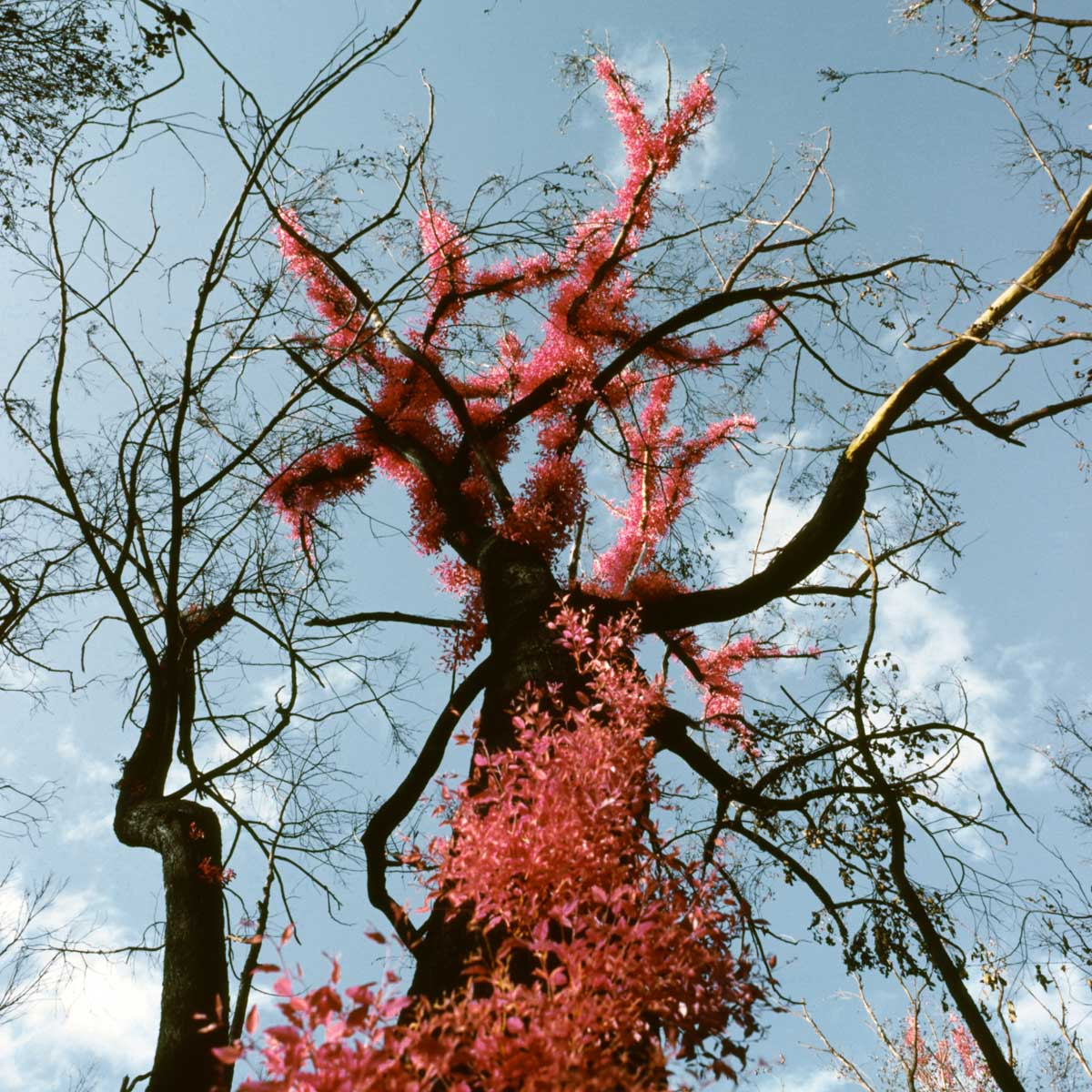 Still Burning - Bronica SQ-A // Kodak AEROCHROME 0