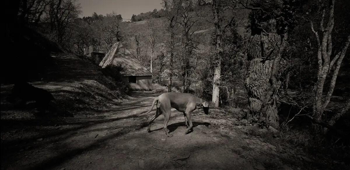 Exmoor, Devon - Kodak Tri-X 400 - Horseman SW612 & 45mm Rodenstock