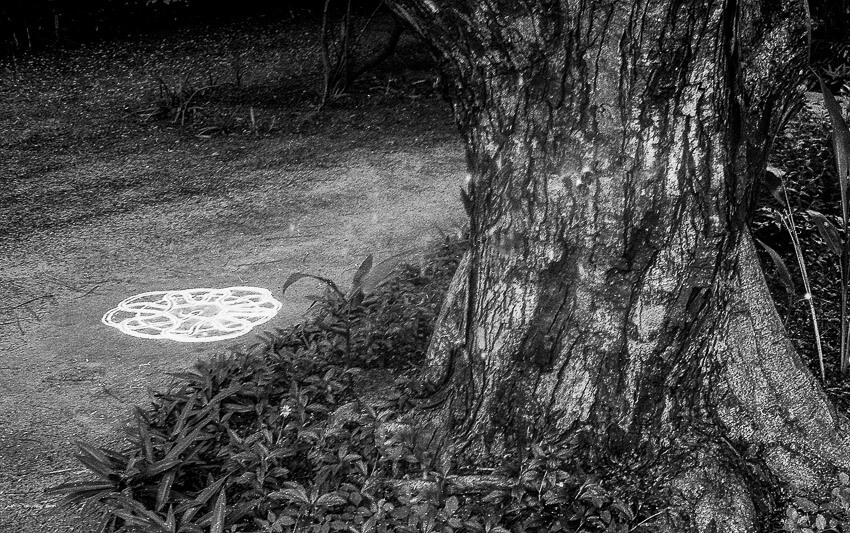 Tree with kolam - 5 Frames... On a leaky FED 5B with Fomapan 400 Action (EI 400 / 35mm format) - by Sasi Somu