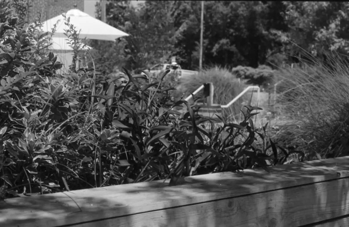 5 Frames... Of talking Robert Palmer's advice on Fomapan 200 Creative (35mm Format / EI 160 / Nikon EM + Nikon 50mm f/1.8 Series E) - by Jonathan King