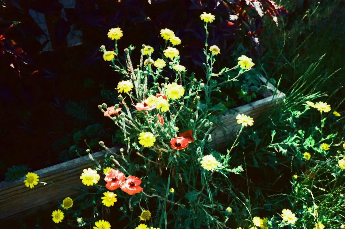 Flowers Xpro