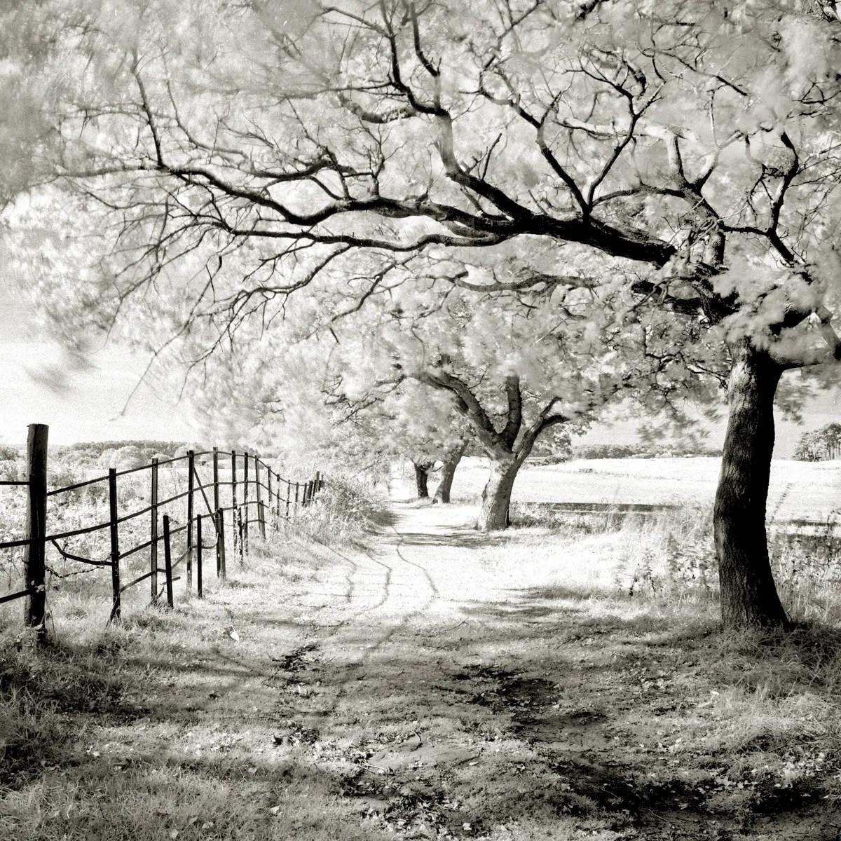 Trees and railings