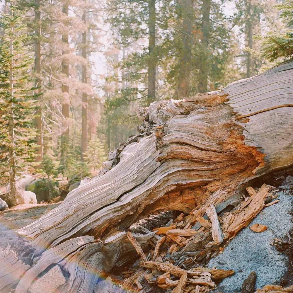 5 Frames... Of Yosemite National Park on a Yashica Mat-124 G and Kodak Portra 400 (120 Format / EI 400) - By Simon Kim