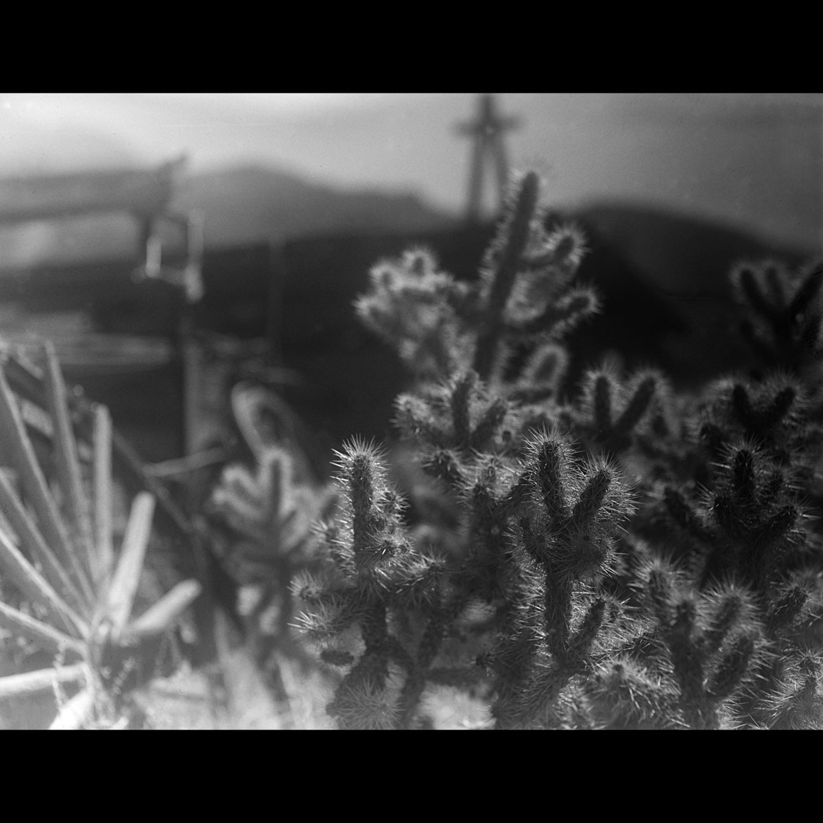 David Hancock - Cactus