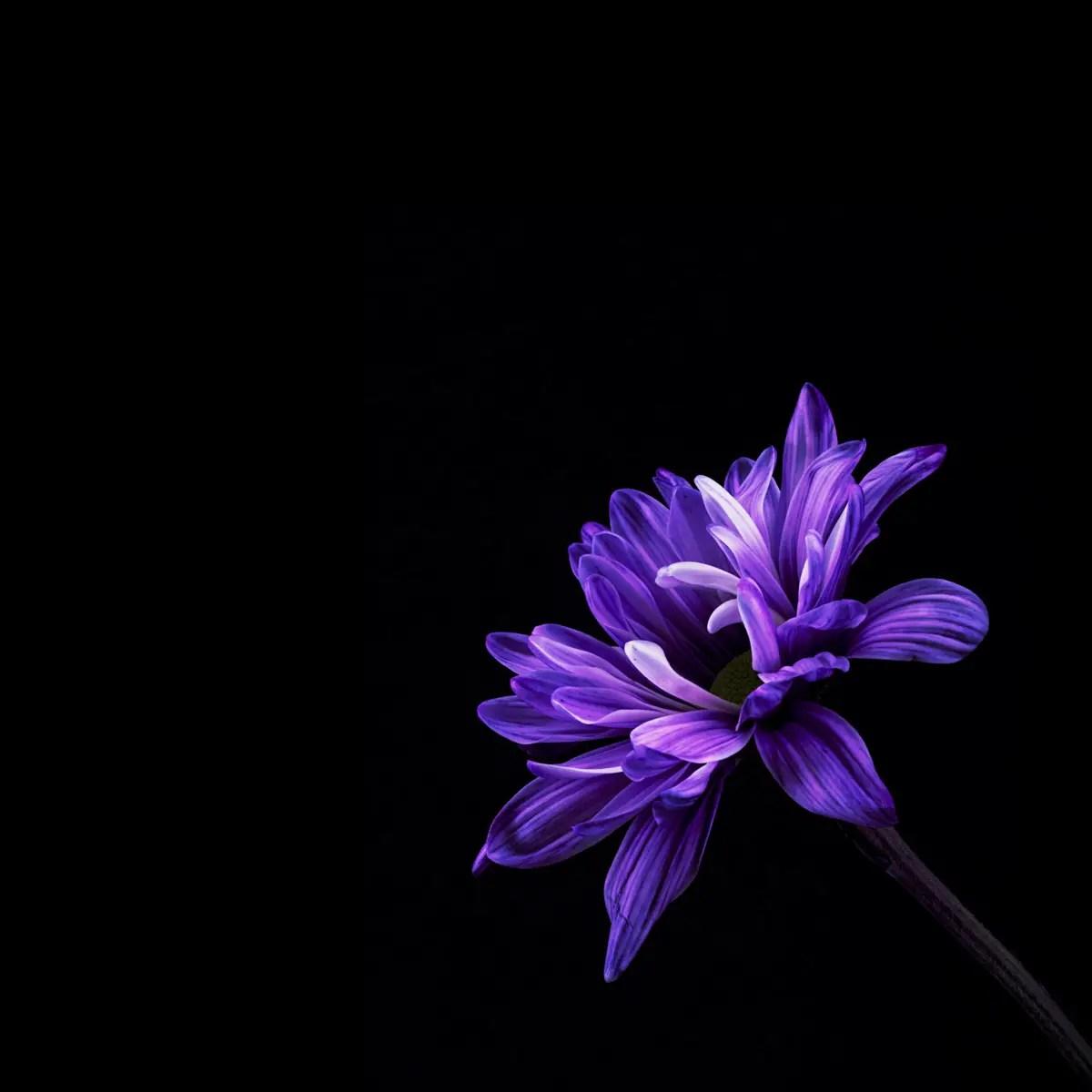 David Hancock - Flower (29) B SQ