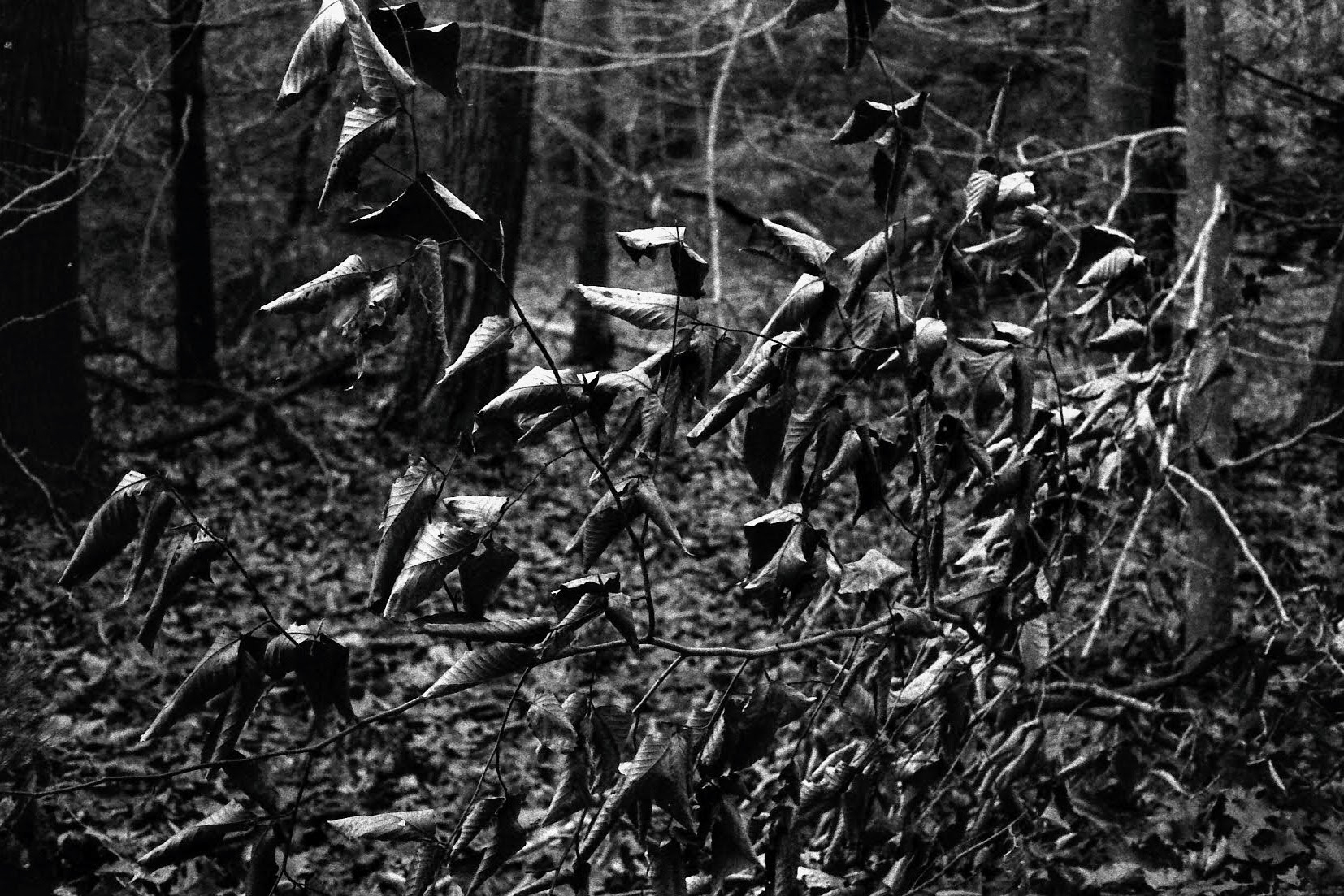 5 Frames... From a walk around Cape Pond, Massachusetts on Kodak Tri-X 400 (35mm Format / EI 400 / Yashica Electro 35 GSN) - by Bob Harrison