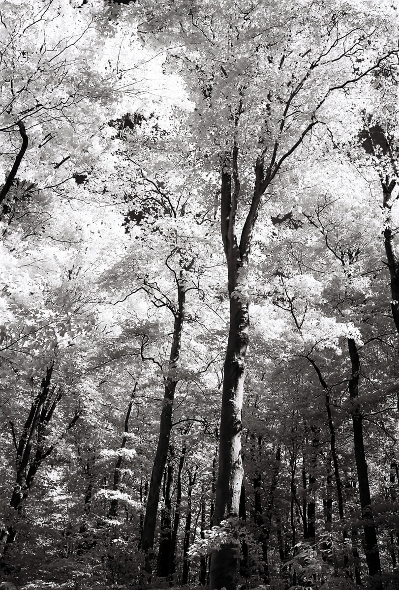 5 Frames... Of Rollei Infrared 400 film somewhere in Northern Michigan (35mm Format / EI 25 / Nikon F3HP + Nikkor 24mm f 2.8 AI-S) - by Michael Hertz