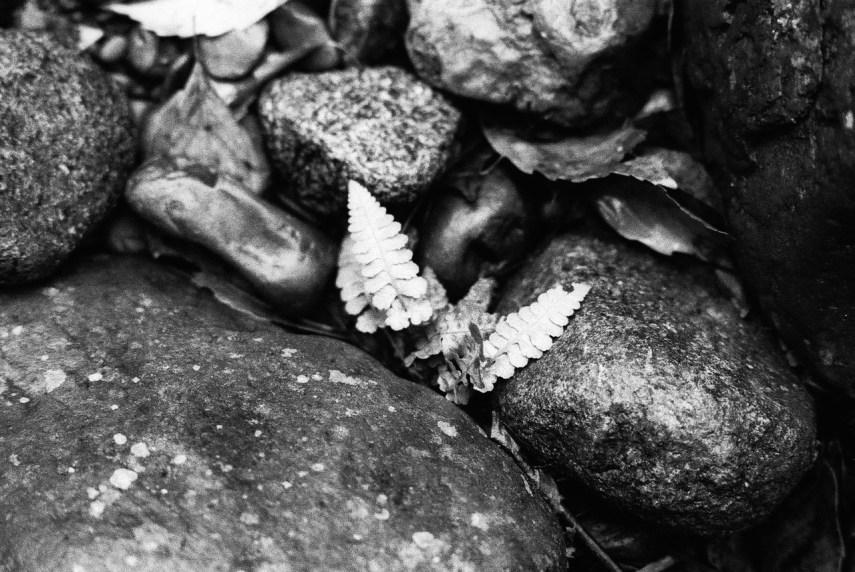Forest floor - Shot on Ilford Delta 400 Professional at EI 800. Black and white negative film in 35mm format. Push processed one stop.