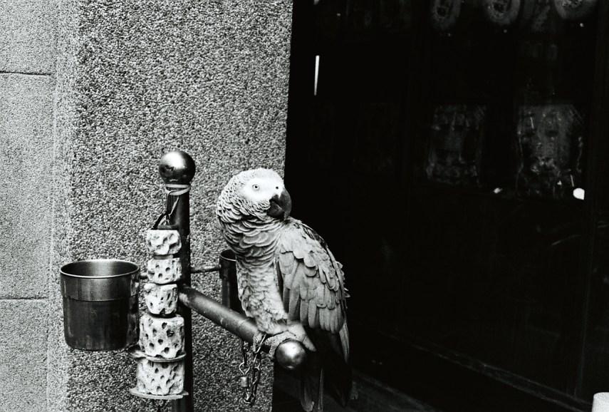 Prettyboy - Kodak Tri-X 400 shot at EI 800. Black and white negative film in 35mm format. Push processed one stop.