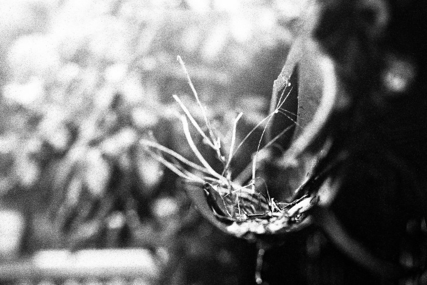 2016-06-27 - What is it? - Eastman Double-X 5222 shot at EI 800. Black and white film in 35mm format. Push processed 1+2/3 stops.