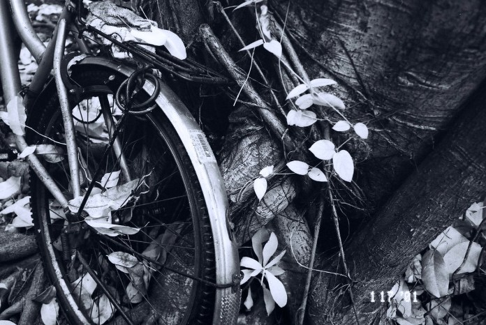 Intertwined - Shot on Rollei Infrared 400 at EI 25.  Black and white infrared sensitive film in 35mmformat.