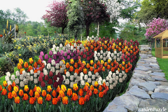 Tulip Garden Designs Vegetable Garden Online