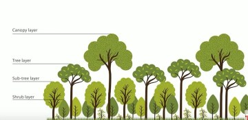 miyawaki forests are designed to regenerate land in far less time than the time it takes a forest to recover on its own, which is over 70 years. How To Grow A Forest Using The Miyawaki Method In Minimal Space