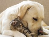 Travelling With Pets Animals Aegean