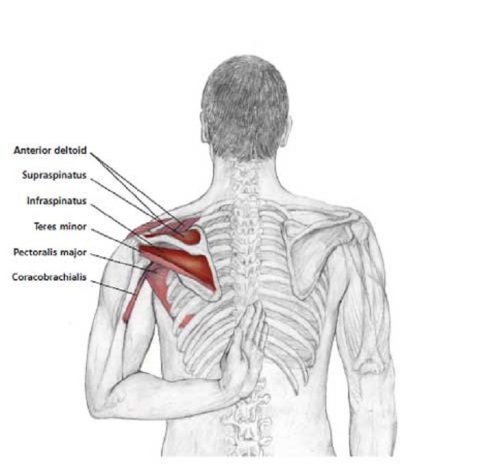 nerves in neck and shoulder diagram three phase of soil stretches to reduce tension health babamail easy release shoulders