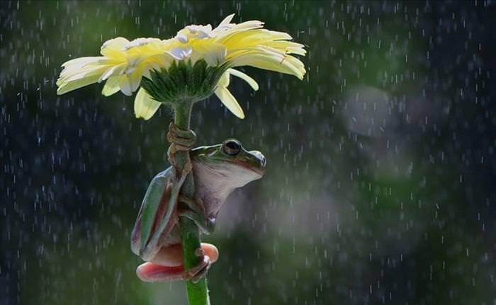 Resultado de imagem para flores na chuva com rio