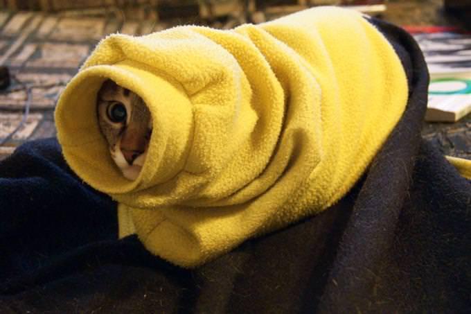 gato enrolado na toalha