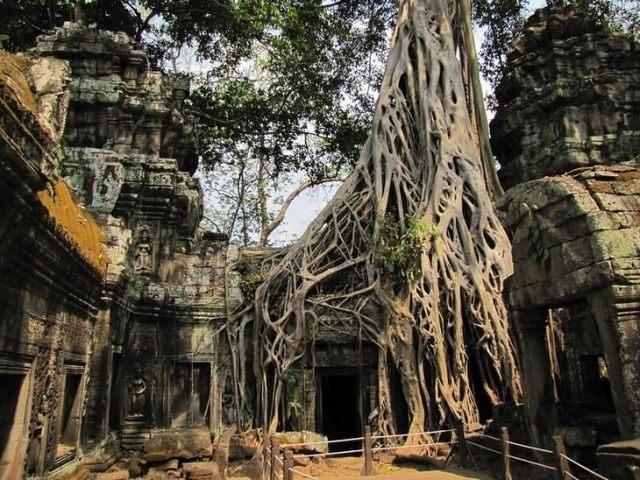 ancient ruins Ta Prohm Temple, Cambodia