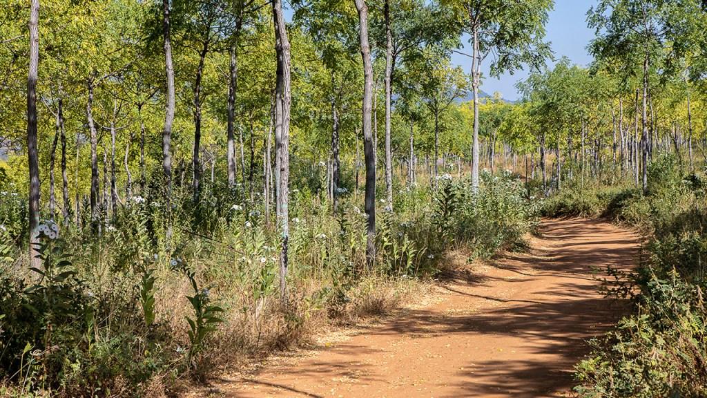 Infarten till Kiambere-plantagen, Kenya, juli 2018.