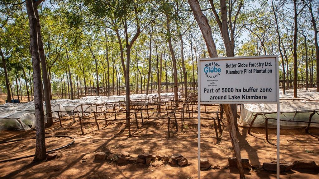 Kiambere plantations, Kenya, July 2018.