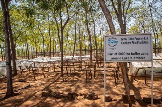 Kiambere-plantagen, Kenya, juli 2018.