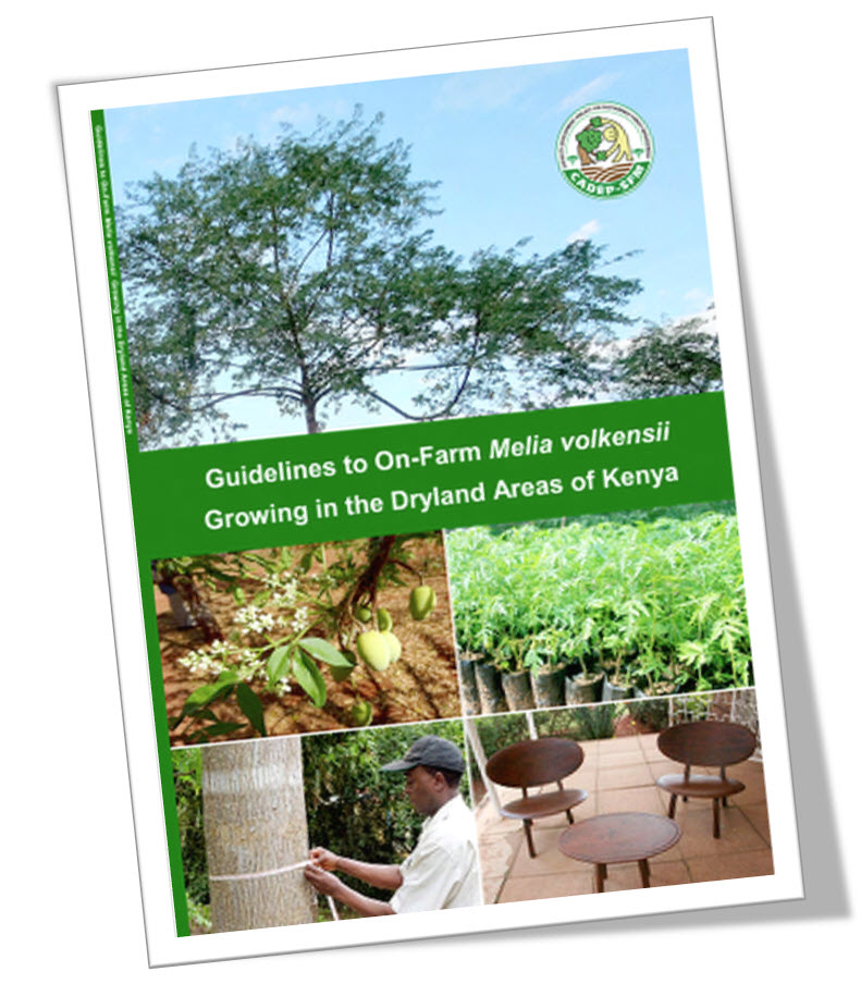 Guidelines to Growing Melia volkensii in the Dryland Areas of Kenya