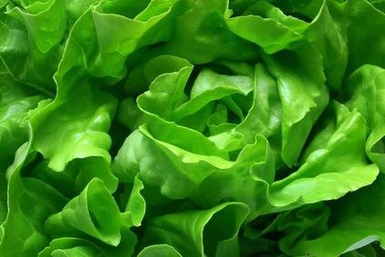 Lettuce, excellent vegetable