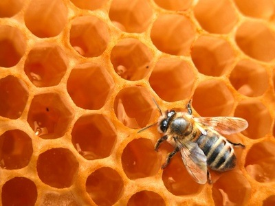 The hive society: royal jelly, pollen, honey, wax…