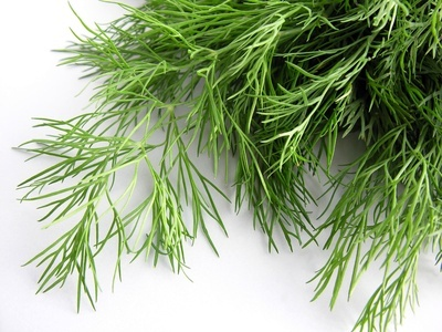 8 Herbs to purify the blood