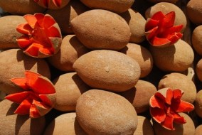 Mamey Recipes