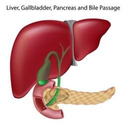 Elevated bilirubin and liver health